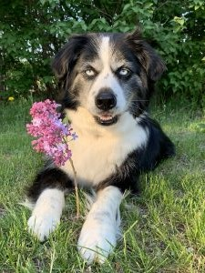 fur lilac love